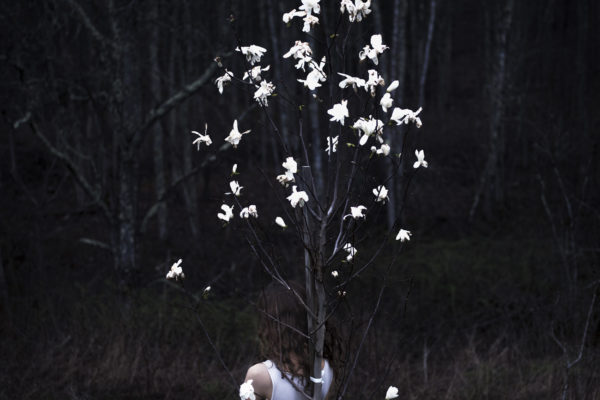 09.MagnoliaTree