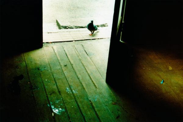 14_Eriko Koga_Asakusa Zenzai_Lost_2008_24×36mm
