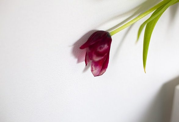 CelineMarchbank_Tulip-2010_15