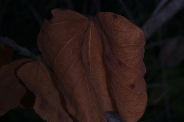 09_BundurakisElena_Leaf